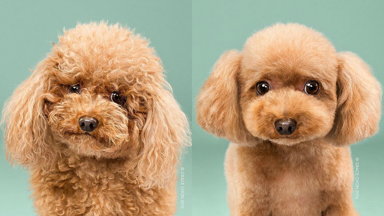 Doggies Before And After Their Haircut_001
