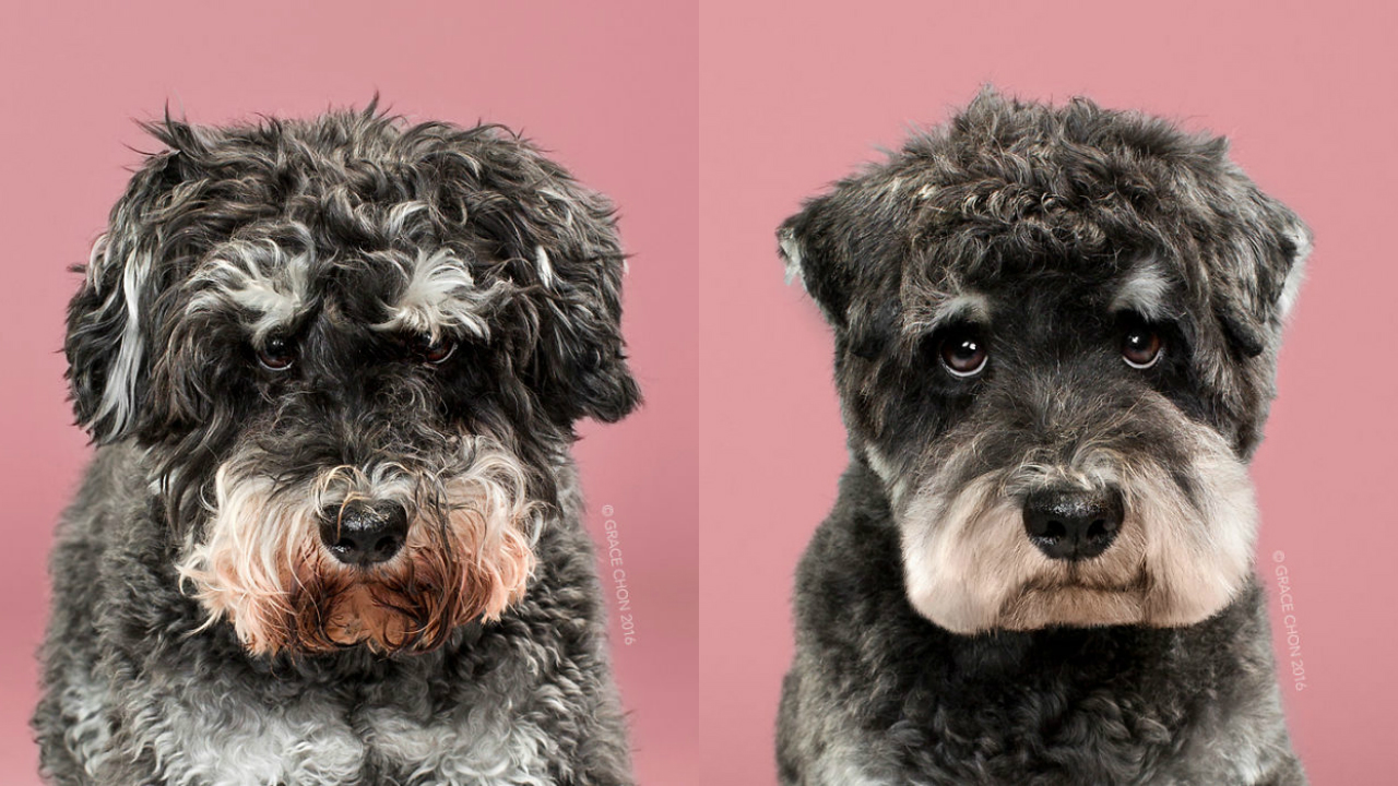 Doggies Before And After Their Haircut_004