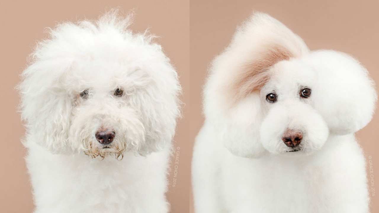 Doggies Before And After Their Haircut_006