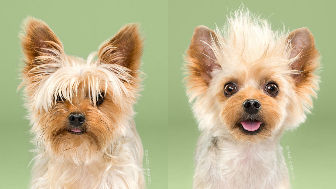 Doggies Before And After Their Haircut_007