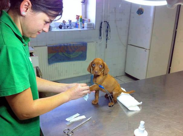 These Pictures Will Make You Want To Work At An Animal Hospital2