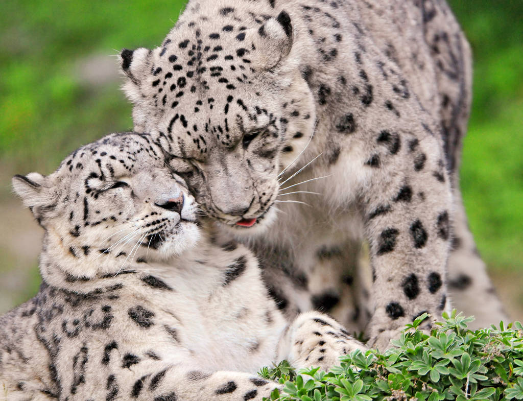 Animal Parents With Their Animal Babies_048