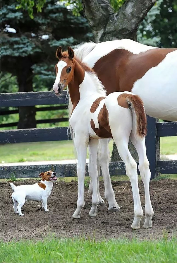 Animals Who Could Be Confused For Siblings But Are NOT! (2)