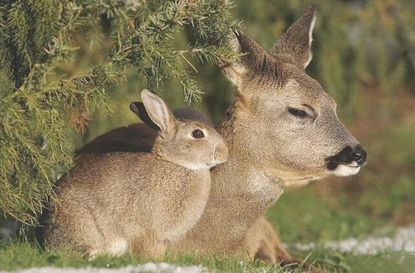 Animals Who Could Be Confused For Siblings But Are NOT! (3)
