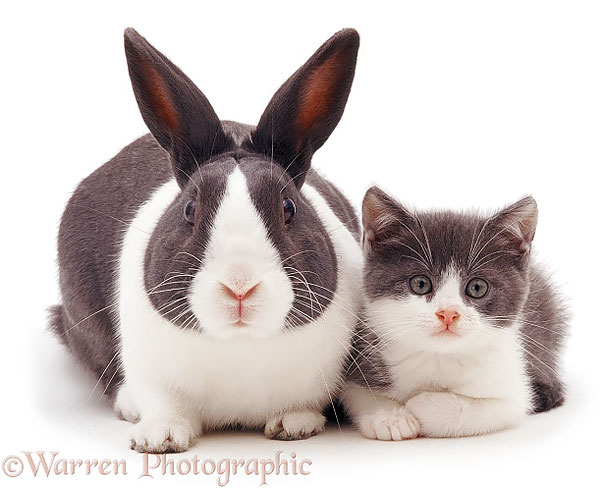Animals Who Could Be Confused For Siblings But Are NOT! (4)