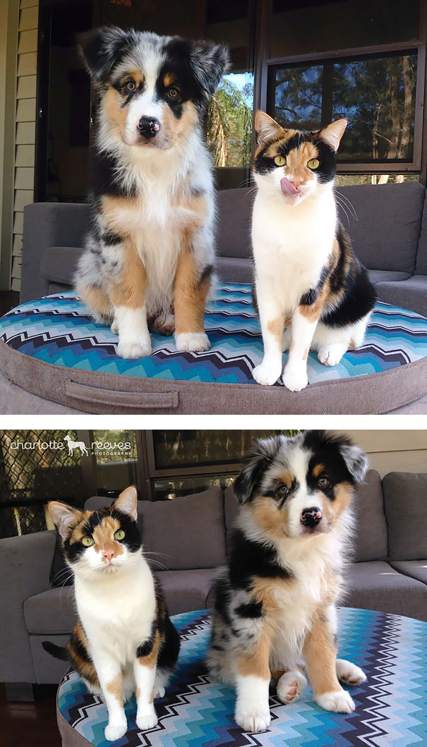 Animals Who Could Be Confused For Siblings But Are NOT! (5)