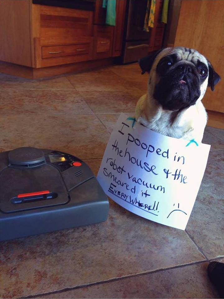 Confessions By These Cute Doggies (1)