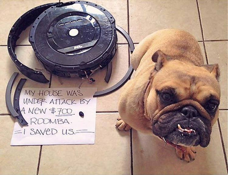 Confessions By These Cute Doggies (2)