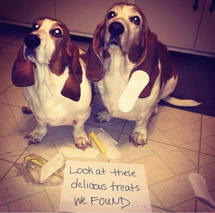 Confessions By These Cute Doggies (4)