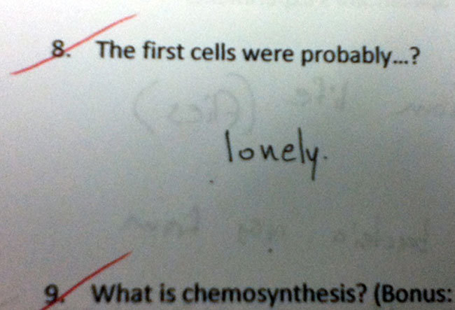 Exam Answers That Wrong But Pure Genuis (22)