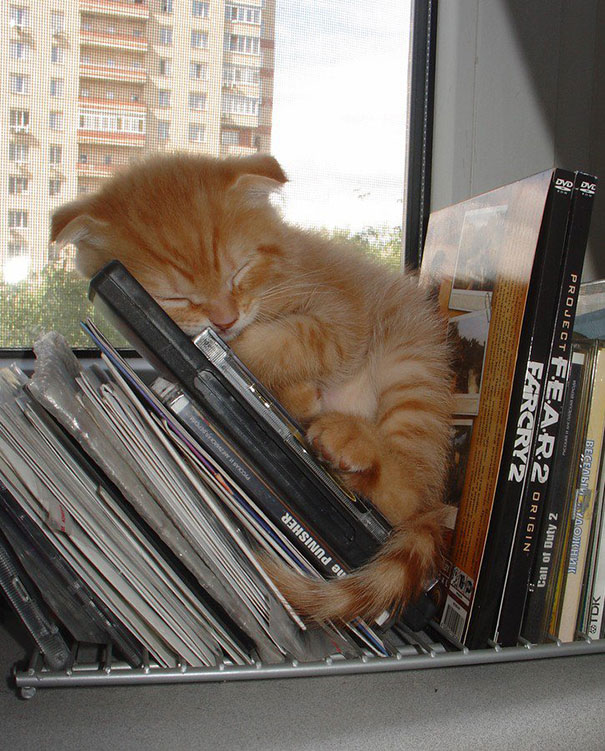 Kittens Who Are Asleep And Hilarious At The Same Time! (10)