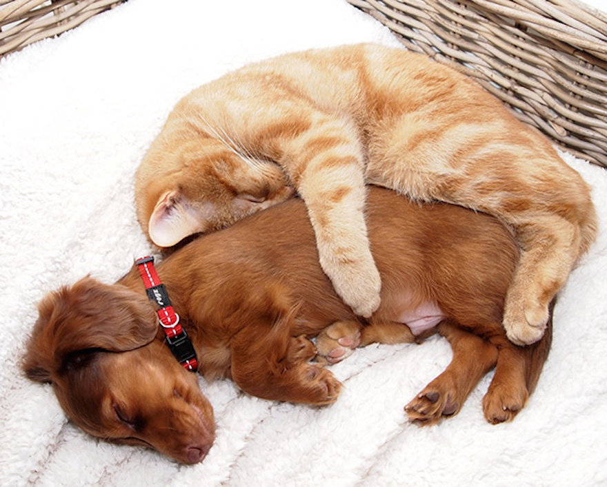 Pictures That Prove Cats And Dogs Are Actually Friends 1