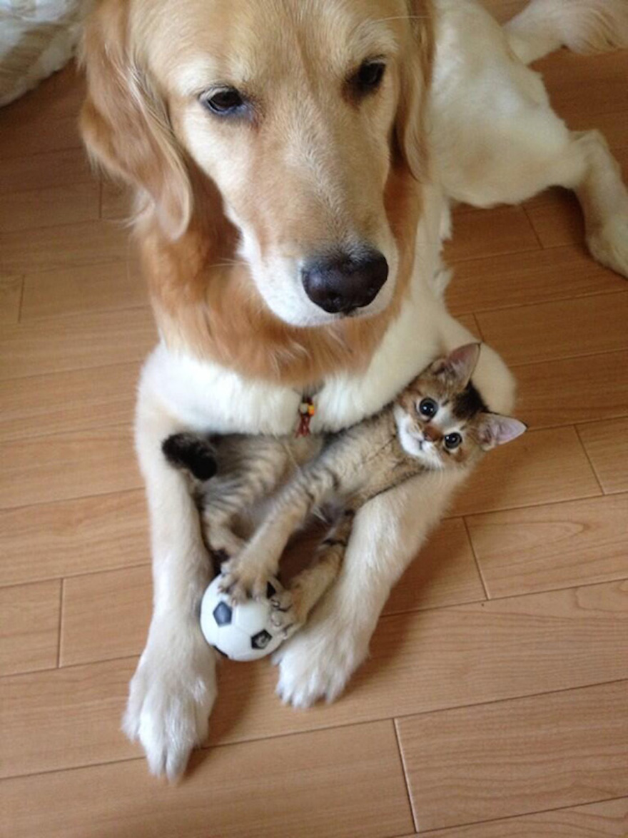 Pictures That Prove Cats And Dogs Are Actually Friends 10