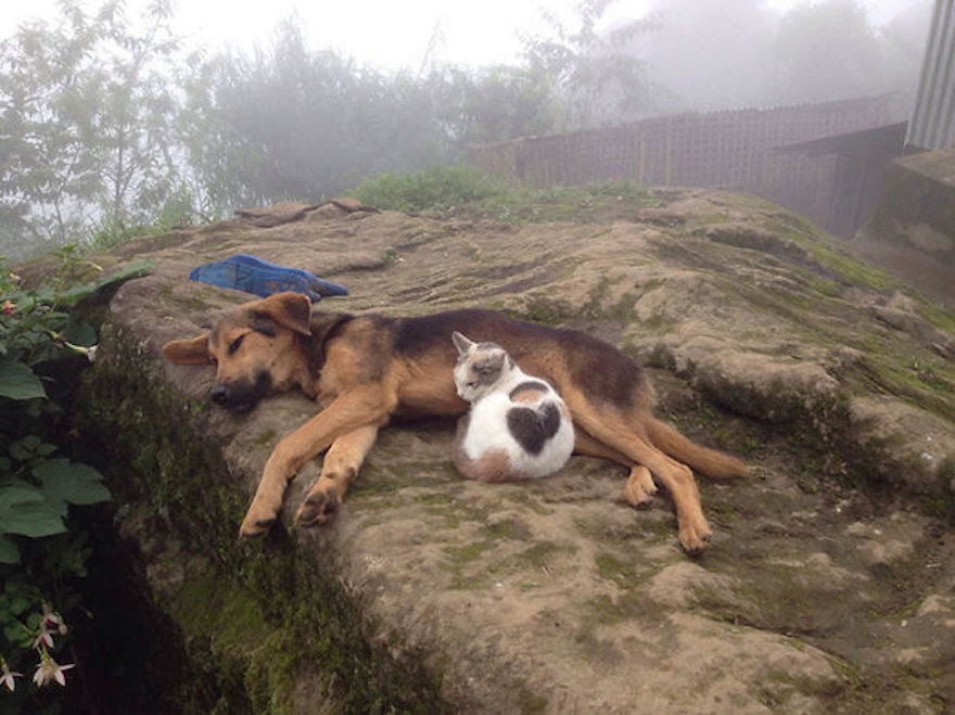 Pictures That Prove Cats And Dogs Are Actually Friends 12