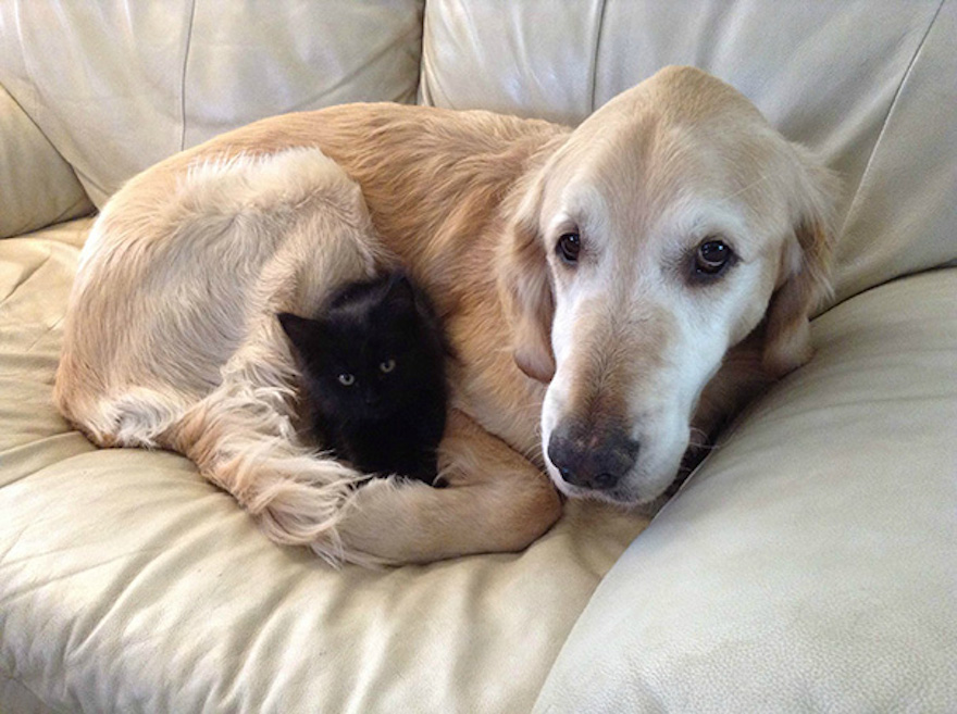 Pictures That Prove Cats And Dogs Are Actually Friends 14