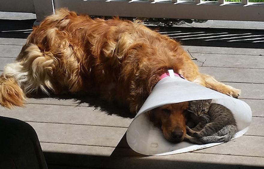 Pictures That Prove Cats And Dogs Are Actually Friends 2