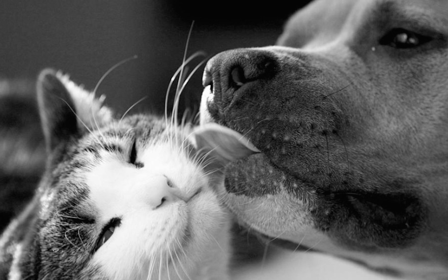 Pictures That Prove Cats And Dogs Are Actually Friends 6