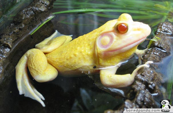 These 26 Albino Animals Don't Need Color To Prove Themselves (9)