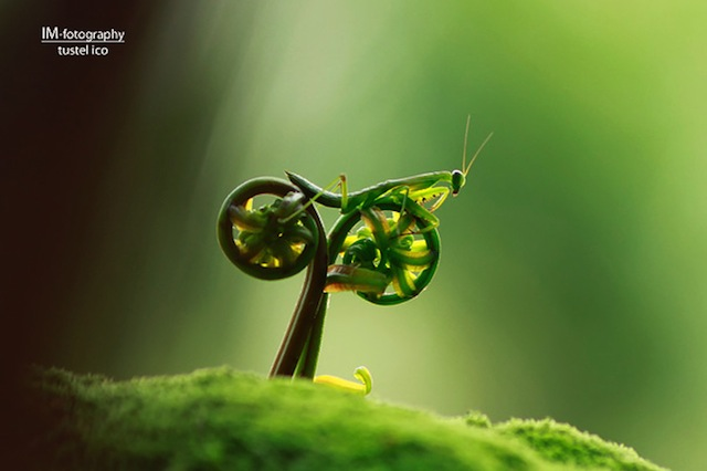 Times Photographers Captured Nature At The Right Time (15)