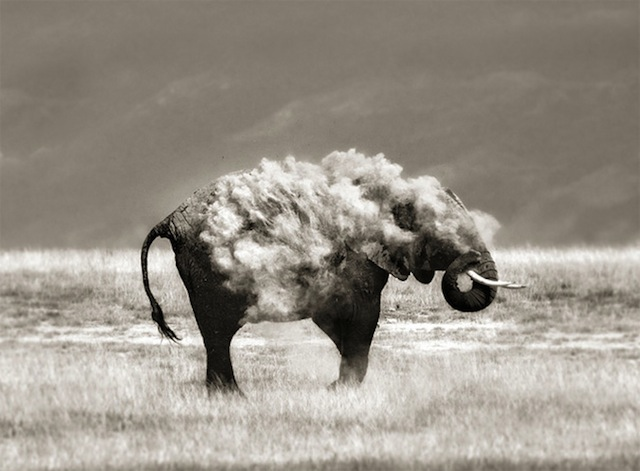 Times Photographers Captured Nature At The Right Time (17)
