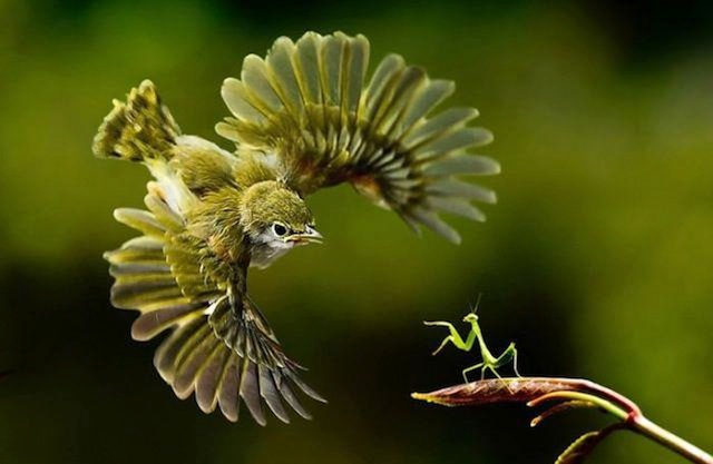 Times Photographers Captured Nature At The Right Time (2)