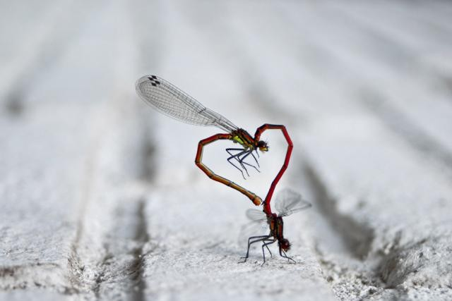 Times Photographers Captured Nature At The Right Time (31)