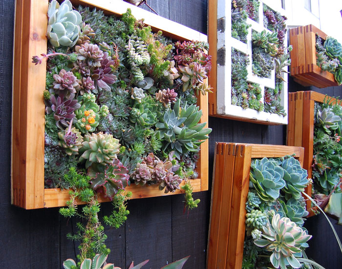 Ways To Make Your Garden Fences Look Extraordinary 13