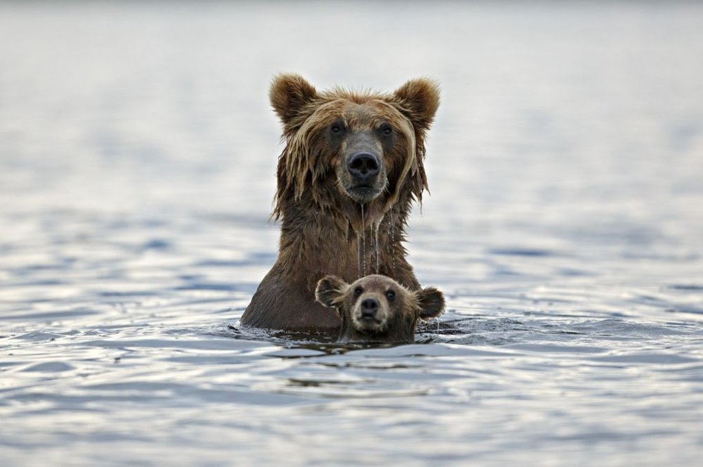 Incredible Photos Of Families From The Animal Kingdom (16)
