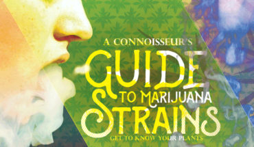 Get To Know Marijuana Plants Better - Infographic