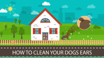 Your Dog's Ear Hygiene Is Important - Infographic