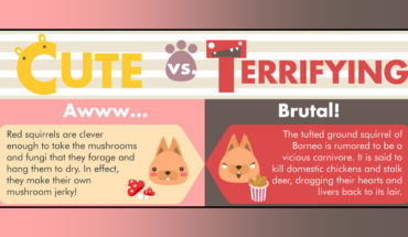 Adorable and Horrifying Animal Facts - Infographic