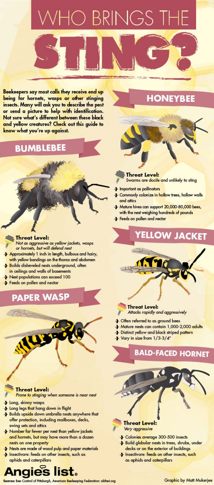 Bees vs. Wasps: Who Brings The Sting? - Infographic