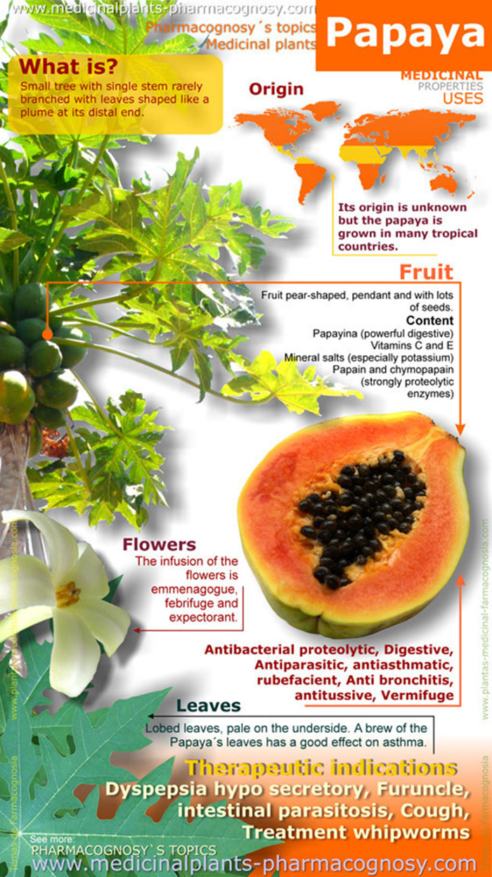 Here's How A Papaya is Beneficial For Your Health - Infographic