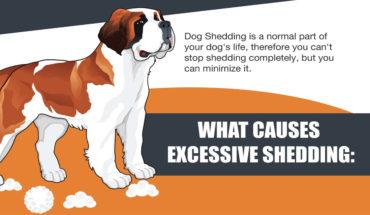 9 Ways To Reduce Dog Shedding - Infographic GP