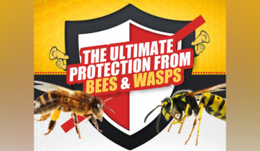 A Guide To Protecting Yourself From Bees And Wasps - Infographic