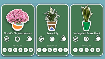 Best Indoor Plants - Infographic