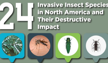 Bugs That You Must Be Aware Of - Infographic