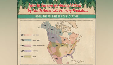 How To Face An Animal Attack In North America - Infographic GP