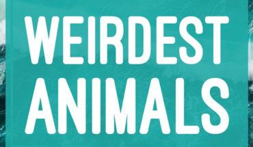 Top 11 Weirdest Animals - Infographic