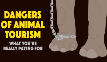 Animal Tourism Is Anything But Fun - Infographic