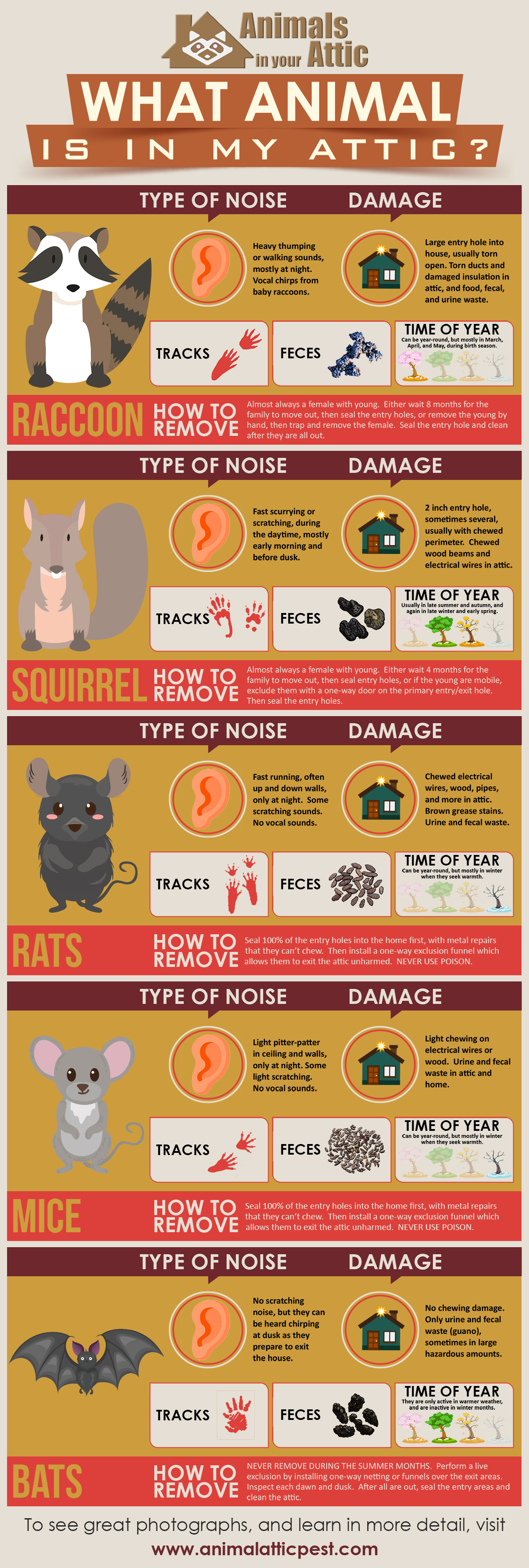 Find Out Which Animal Is In Your Attic - Infographic