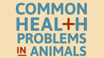 How To Deal With Different Health Problems In Your Pet - Infographic