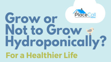 What Crops You Can/Can't Grow Hydroponically - Infographic