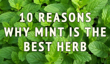 10 Reasons Why Mint Is The Best Herb