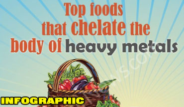 Top Foods that Chelate the Body of Heavy Metals - Infographic
