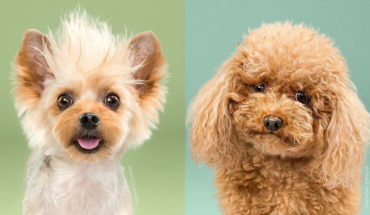 8 Doggies Before And After Their Haircut