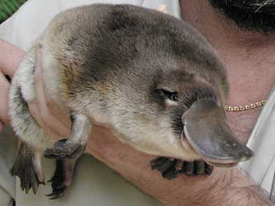 Animals You Want To Hug But Should NOT 10