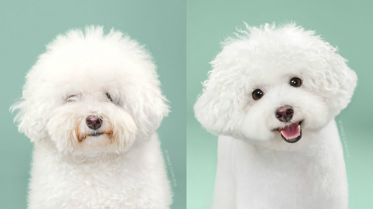 Doggies Before And After Their Haircut_003