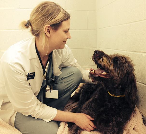 These Pictures Will Make You Want To Work At An Animal Hospital31