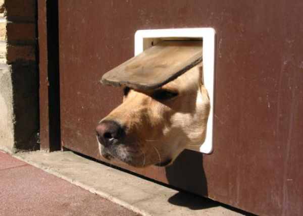 26 Epic Dogs Fails That Are Bound To Make You Fall Off Your Chair (1)